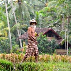 rice-farmer-in-ubud-bali